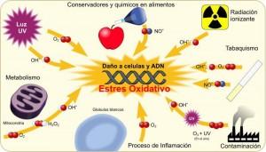 factores que incrementan el estrés oxidativo