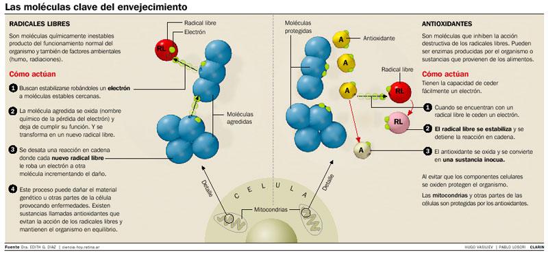moleculas-del-envejecimiento-tratamiento-ozonoterapia-ozono-valencia-ivot