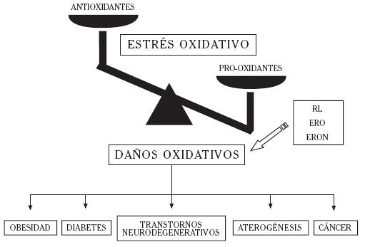 La superación de los sistemas pro-oxidantes por los antioxidantes favorece la instauración del estrés oxidativo, caracterizado por la producción exacervada de radicales libres (RL).