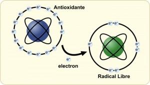 La pérdida de un electrón convierte el átomo sano en un radical libre.